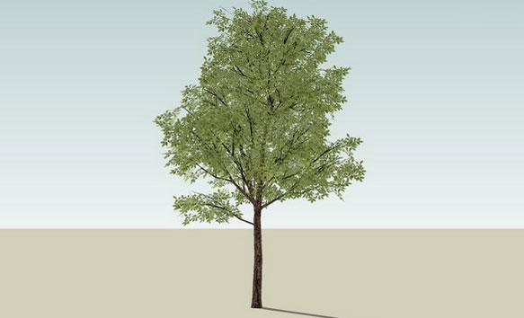 SketchUp Components 3D Warehouse - Plants