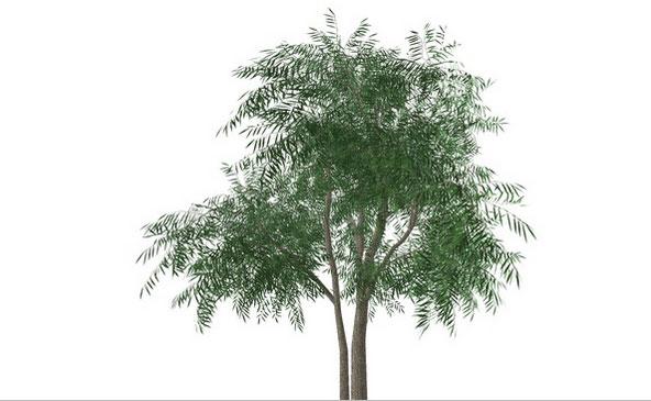 Как в sketchup сделать 3d растения