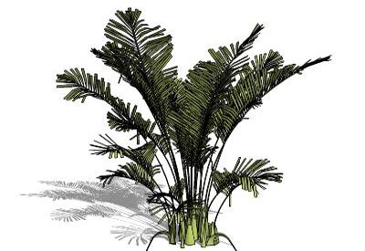 Sketchup Components 3d Warehouse Plants Plant Tree Trees