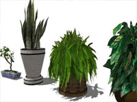Indoor Plants in Sketchup