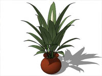 Potted Plant in SketchUp