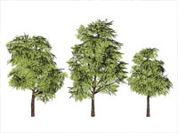 Smart Tree in Sketchup