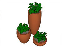 Three Vaso Plants in Sketchup